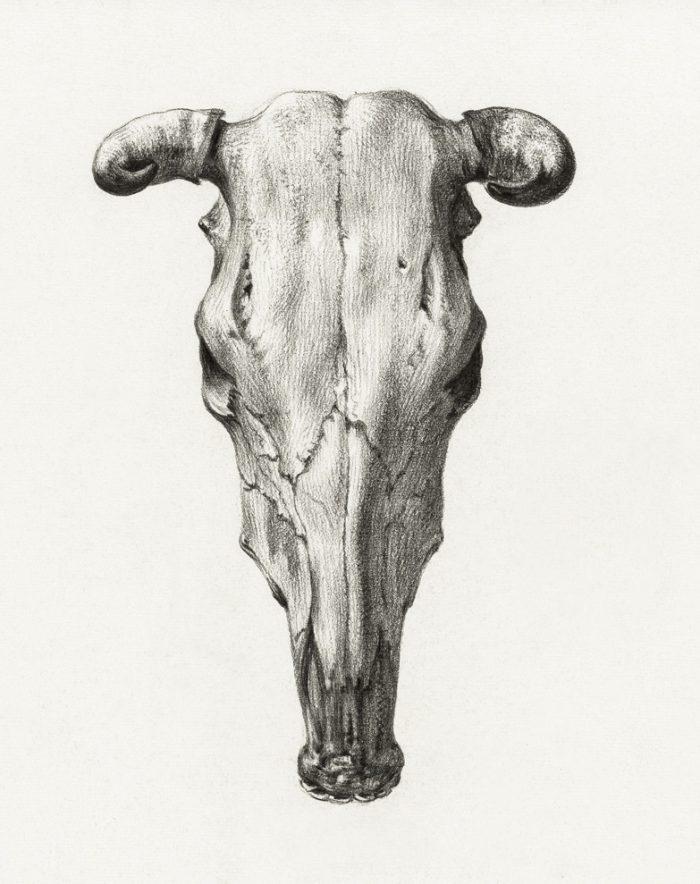 cow skull print